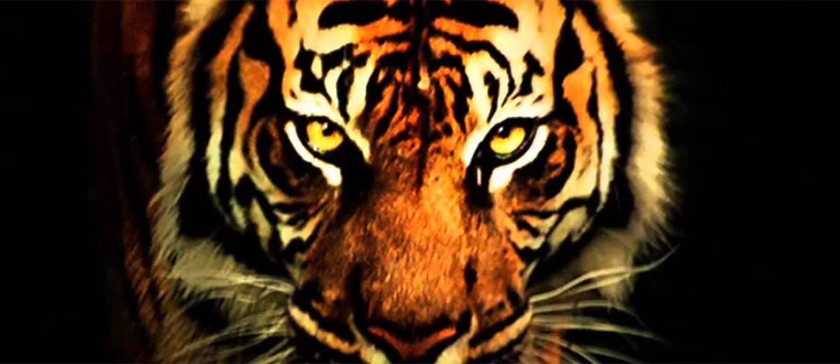 """Cuando se pierde la """"mirada del tigre"""""""